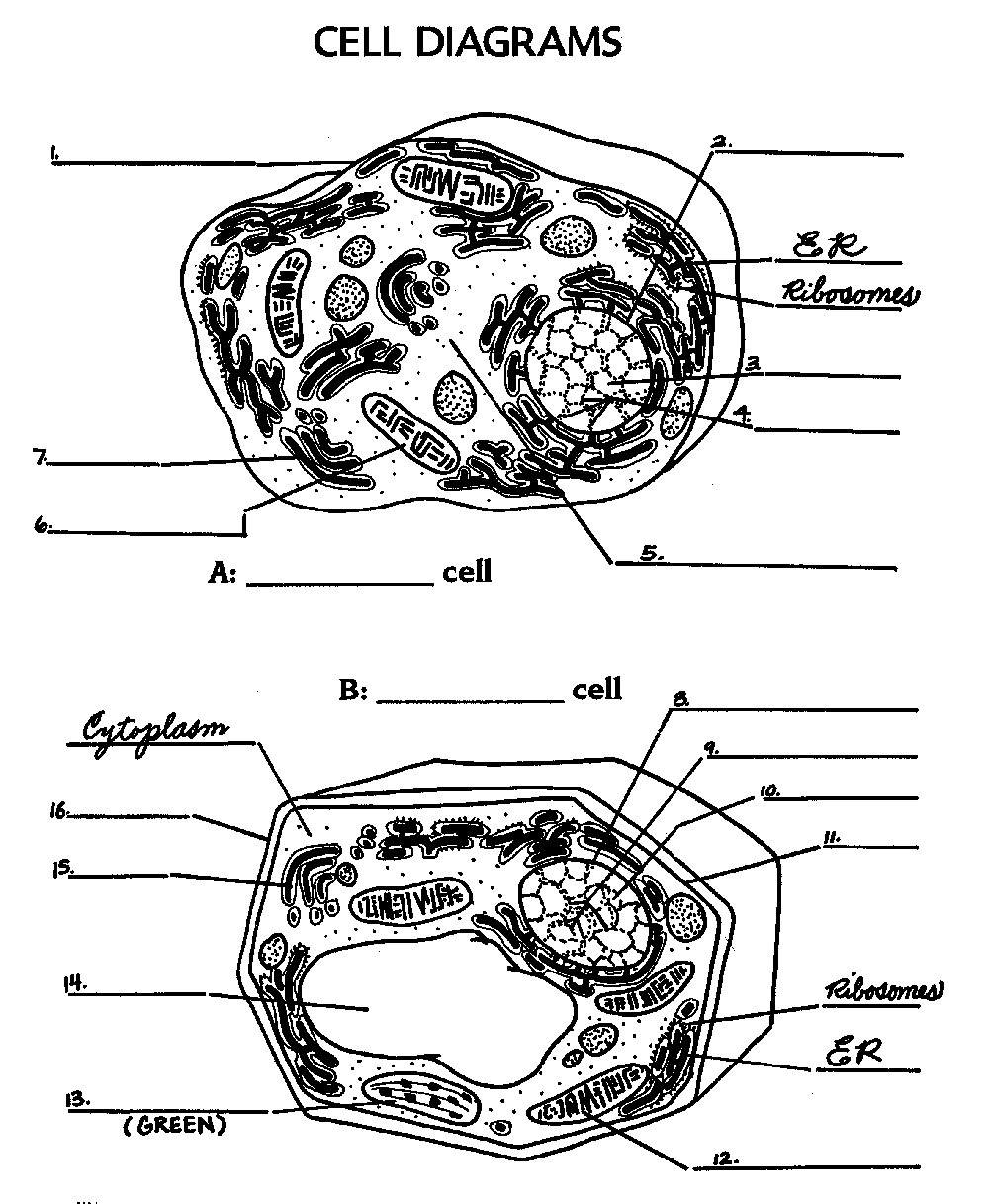 ... cell a bration ec 301 x 389 gif 26kb cell structure worksheet