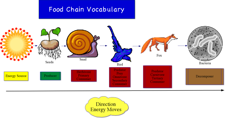 ecosystem food chain. energy and nutrients from