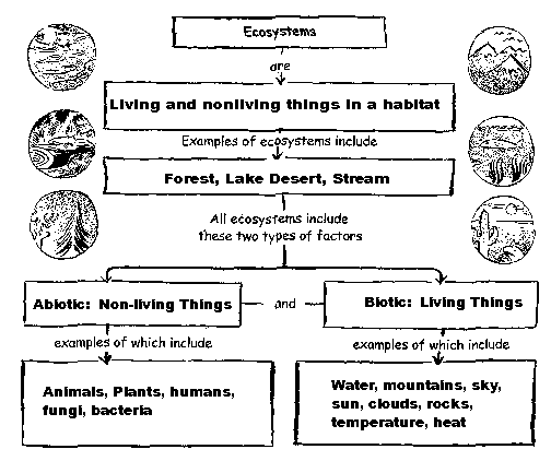 Ecology – Producers Consumers and Decomposers Worksheet