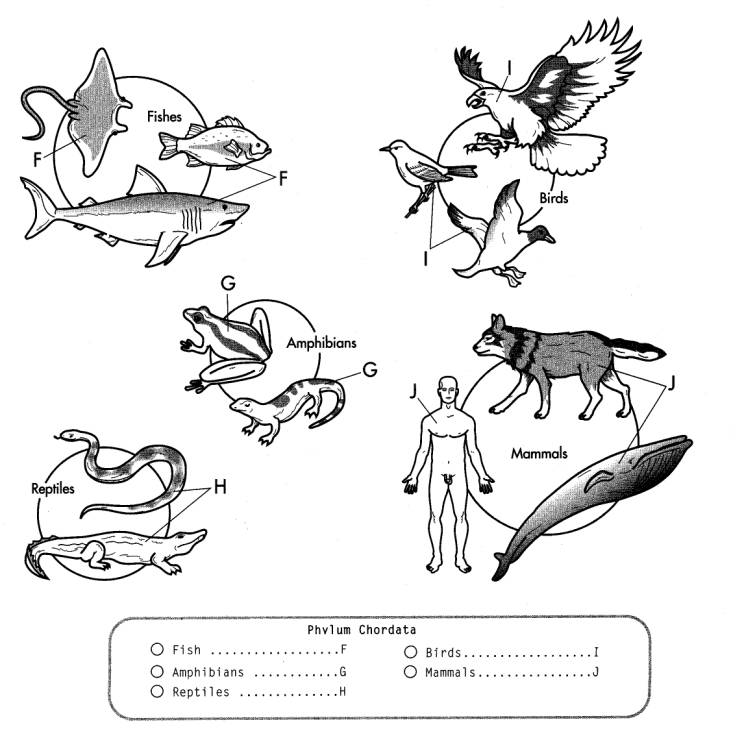 Vertebrate Animals Coloring Pages : Vertebrates animals colouring pages